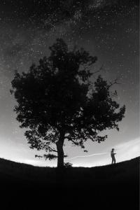 gauche_arbre_noir